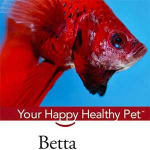 Betta book