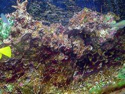 aquarium algae gone wild