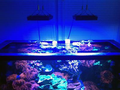 Ecotech Radio Pro LED