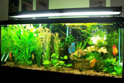 75 Gallon Planted Aquarium