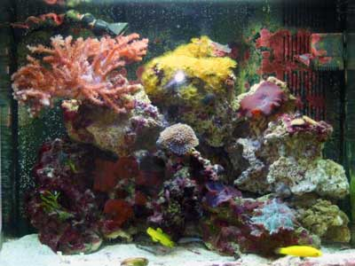 12 Gallon Saltwater Bio-Cube
