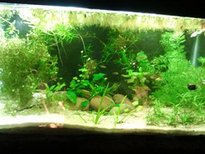 10 gallon heavily planted dirt tank