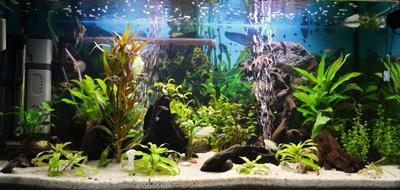 Planted 3ft Aquarium