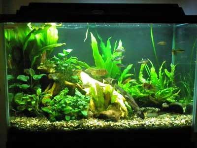 70 Gallon Planted Aquarium