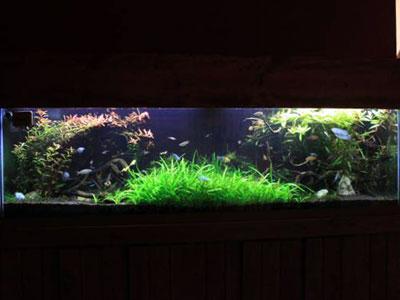 125 Gallon Planted Aquarium