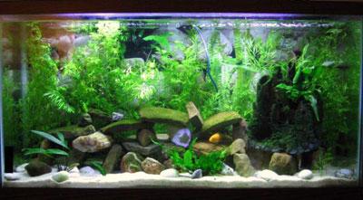 38 Gallon Planted Aquarium