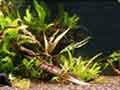 Planted Angelfish Tank