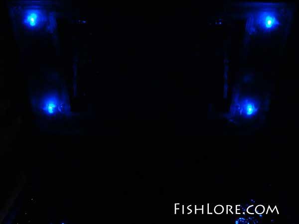 Blue Moon Lights