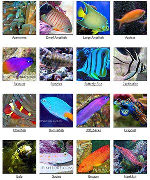 saltwater fish profiles