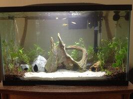 ImageUploadedByFish Lore Aquarium Fish Forum1399868025.384130.jpg