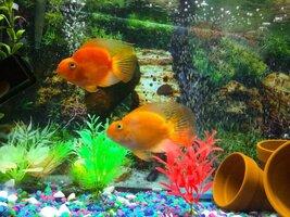 ImageUploadedByFish Lore Aquarium Fish Forum1401753912.462241.jpg