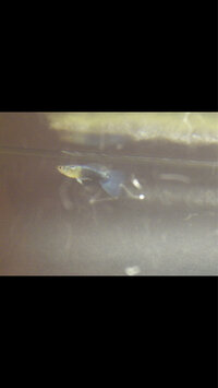 ImageUploadedByFish Lore Aquarium Fish Forum1407816147.045706.jpg