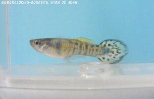 fish stan ea1 016.jpg