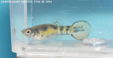 fish stan ea1 031.jpg