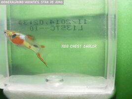 fish stan ea1 143a.jpg