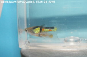 fish stan ea1 041.jpg