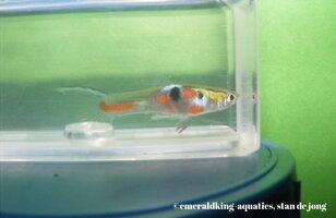 fish stan ea4 041.jpg