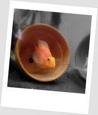 140358d1399823760-blood-red-parrot-photos-eggs.jpg