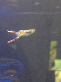 ImageUploadedByFish Lore Aquarium Fish Forum1410019152.987696.jpg