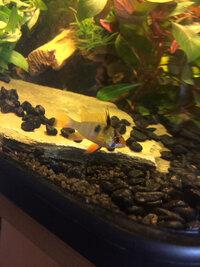 ImageUploadedByFish Lore Aquarium Fish Forum1410029353.288658.jpg