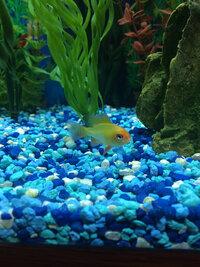 ImageUploadedByFish Lore Aquarium Fish Forum1416026993.637167.jpg