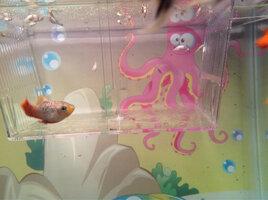 ImageUploadedByFish Lore Aquarium Fish Forum1420251305.240891.jpg