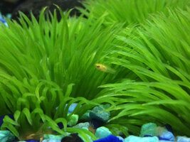 ImageUploadedByFish Lore Aquarium Fish Forum1422253055.236913.jpg