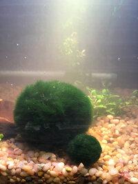 ImageUploadedByFish Lore Aquarium Fish Forum1424628388.176288.jpg