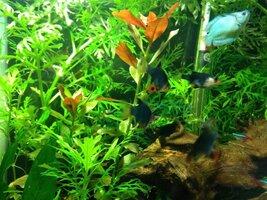 ImageUploadedByFish Lore Aquarium Fish Forum1425918009.160116.jpg