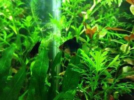 ImageUploadedByFish Lore Aquarium Fish Forum1425918039.184981.jpg
