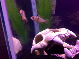 ImageUploadedByFish Lore Aquarium Fish Forum1427678416.204648.jpg