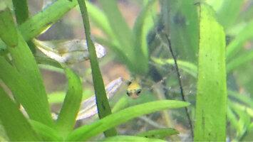 ImageUploadedByFish Lore Aquarium Fish Forum1428135828.893057.jpg