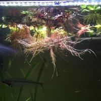 ImageUploadedByFish Lore Aquarium Fish Forum1430706936.767853.jpg