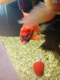 ImageUploadedByFish Lore Aquarium Fish Forum1431918079.200773.jpg