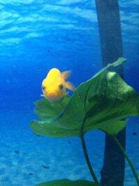 ImageUploadedByFish Lore Aquarium Fish Forum1435911121.342799.jpg