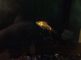 ImageUploadedByFish Lore Aquarium Fish Forum1437157245.355488.jpg