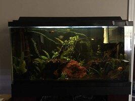 ImageUploadedByFish Lore Aquarium Fish Forum1438111331.986493.jpg