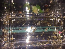 ImageUploadedByFish Lore Aquarium Fish Forum1438124003.117888.jpg