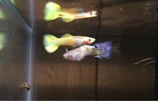 ImageUploadedByFish Lore Aquarium Fish Forum1441171721.331753.jpg