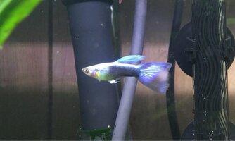 ImageUploadedByFish Lore Aquarium Fish Forum1441171735.734593.jpg