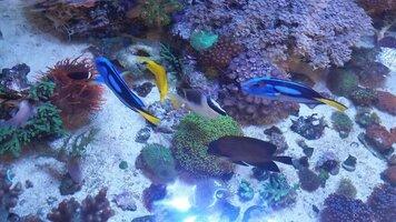 ImageUploadedByFish Lore Aquarium Fish Forum1443027907.181659.jpg