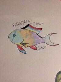 ImageUploadedByFish Lore Aquarium Fish Forum1453161100.324966.jpg