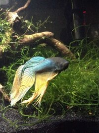 ImageUploadedByFish Lore Aquarium Fish Forum1453314170.584971.jpg