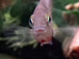 ImageUploadedByFish Lore Aquarium Fish Forum1453832012.327703.jpg