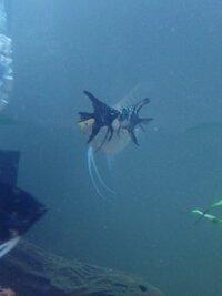 ImageUploadedByFish Lore Aquarium Fish Forum1454959767.524729.jpg