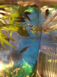 ImageUploadedByFish Lore Aquarium Fish Forum1455709907.654664.jpg