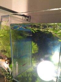 ImageUploadedByFish Lore Aquarium Fish Forum1455709942.778032.jpg