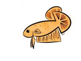 ImageUploadedByFish Lore Aquarium Fish Forum1458536494.956450.jpg