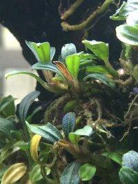 ImageUploadedByFish Lore Aquarium Fish Forum1458748589.500595.jpg