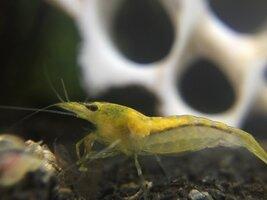 ImageUploadedByFish Lore Aquarium Fish Forum1459808936.792618.jpg